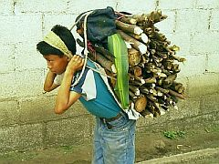 Kid carrying firewood